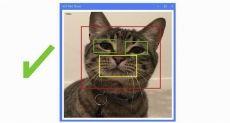 Умная дверца от Microsoft для домашних животных узнает вашего питомца по мордочке