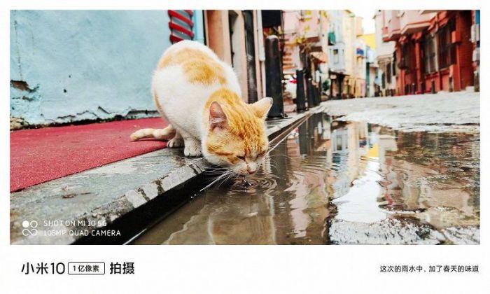 На что способна камера Xiaomi Mi 10 – фото 4
