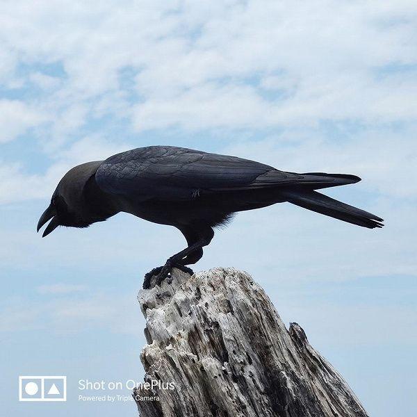 Показали работу 3-кратного зума камеры OnePlus 7 Pro – фото 2