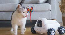 Pumpkii: робот-друг для домашних питомцев