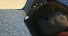 5.5-дюймовый Xiaomi Mi MIX Nano может появиться уже в декабре